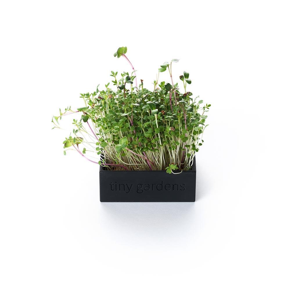 Tiny Gardens micro greens